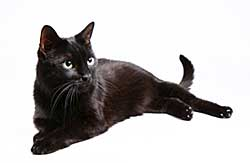 Black Cats – Pet tip 170