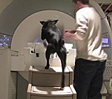 Cat scans and MRIs