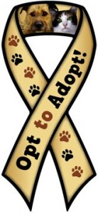 Opt to Adopt Ribbon Magnet