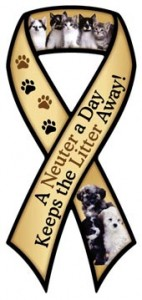 A Neuter A Day Ribbon Magnet