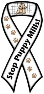 Stop Puppy Mills Ribbon Magnet
