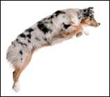 Correcting Jumping Dogs
