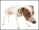 Regurgitation and Vomiting Differences in Dogs and Cats