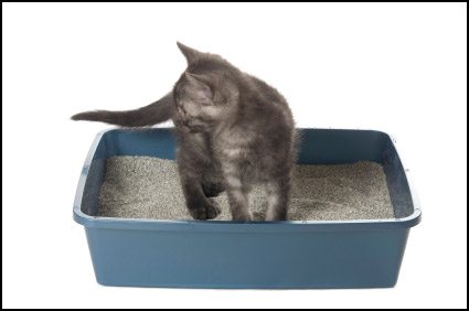 Eliminating a Litter Box