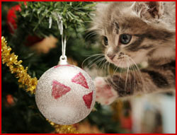 45 – Holiday hazards for cats & dogs – Pet podcast – Interview with Dr. Lee